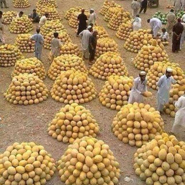 Kabul Water Melon Market Fresh Fruits Season Afgha
