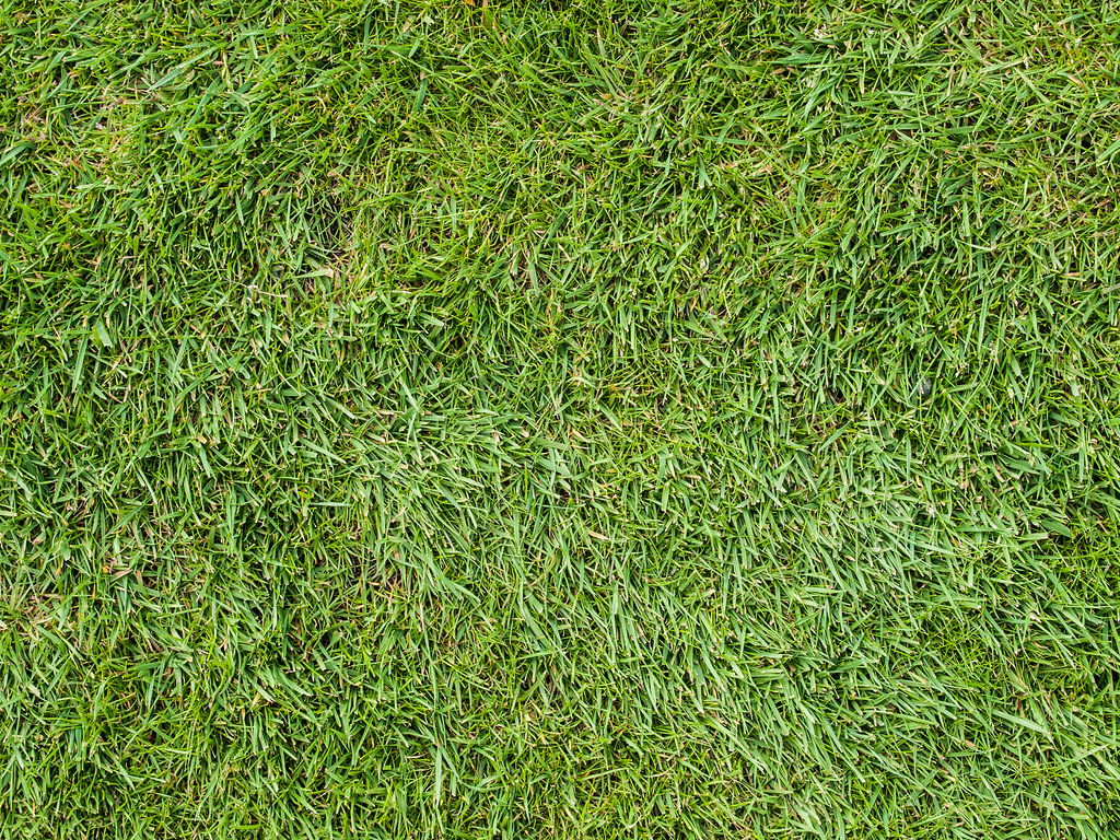 grass texture grass texture permission to use please