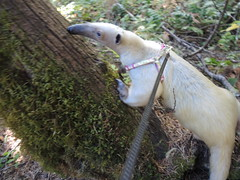 Tree sniffing