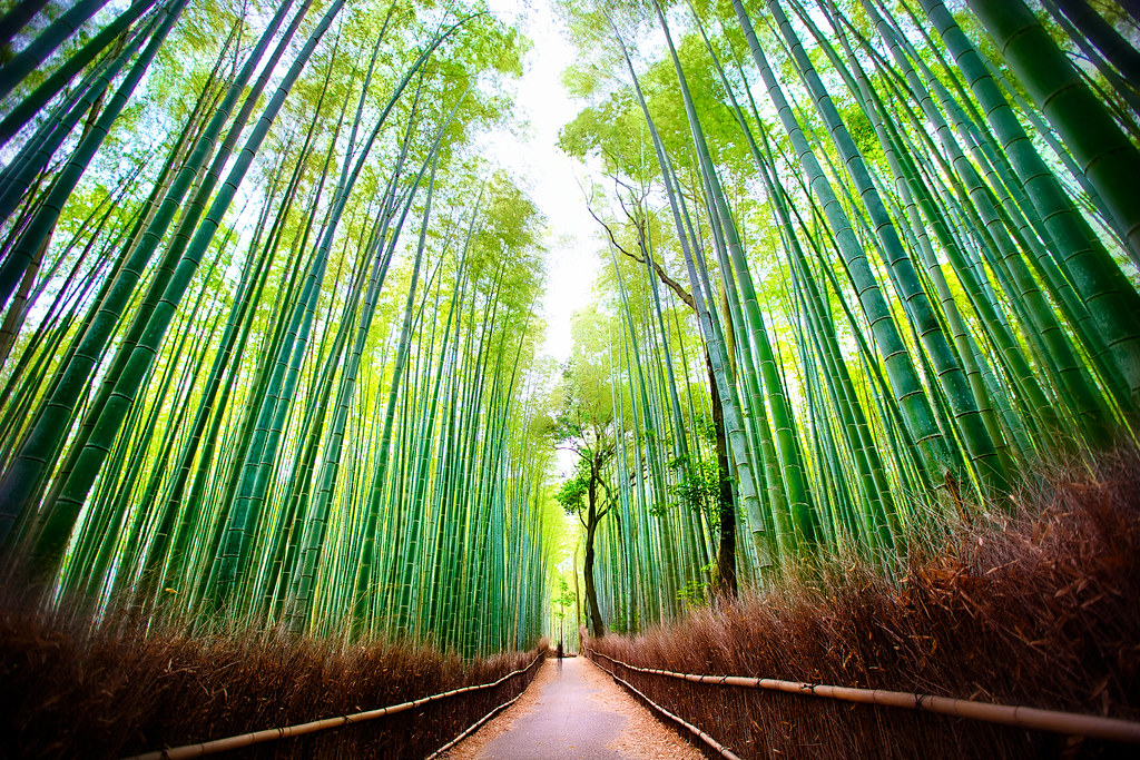 Arashiyama Bamboo Forest in Sagano, Kyoto, Japan  Ghost ...