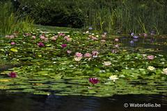 Private Pond San Diego