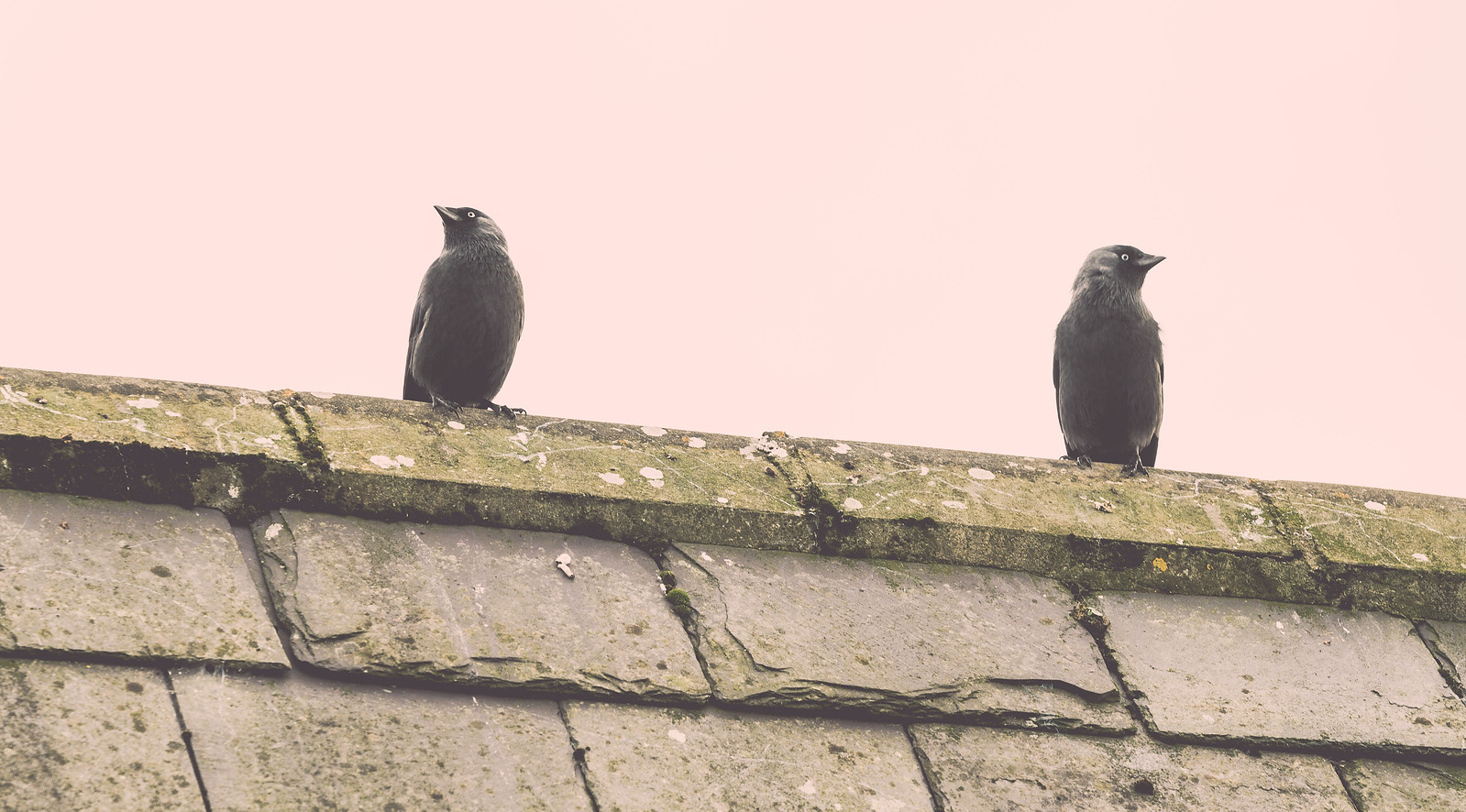Rock of Cashel Crows | by Tony Webster
