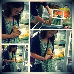 Www.hamstermiendathua.vn