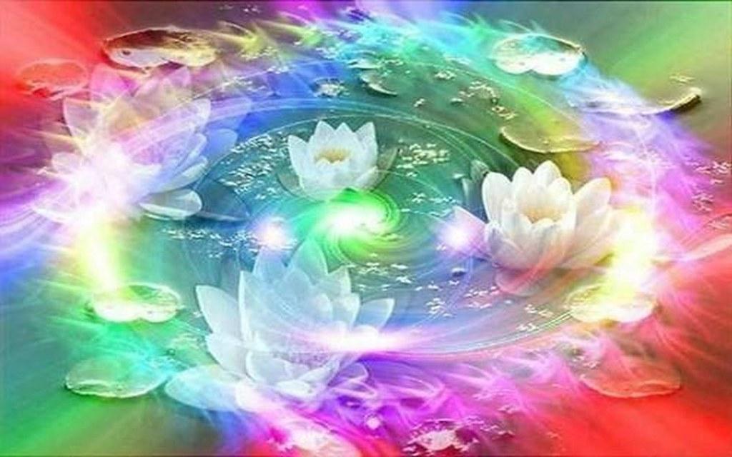 Rainbow Lotus Maf04 Flickr