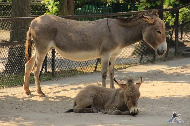 Tierpark Hagenbeck 04.07.2015  143