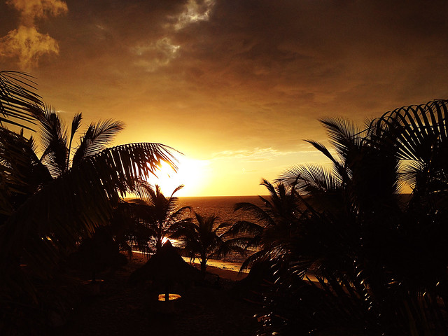Sunset over the Palms in la ceiba honduras