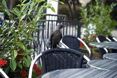 Café Bird