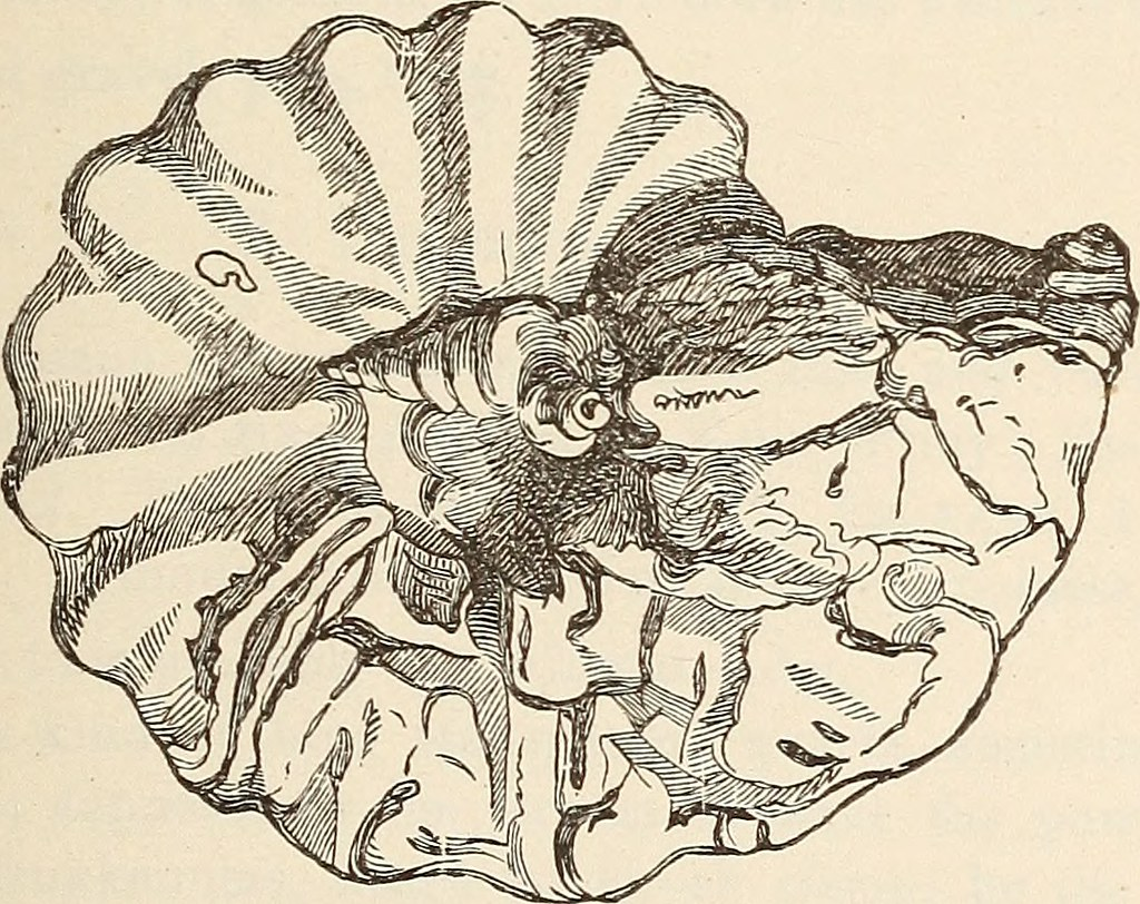 "Image from page 362 of ""The Bible hand-book: an introduction to the study of Sacred Scripture"" (1883) 