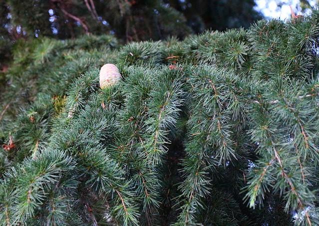 La pomme de pin flickr photo sharing for Lampe pomme de pin