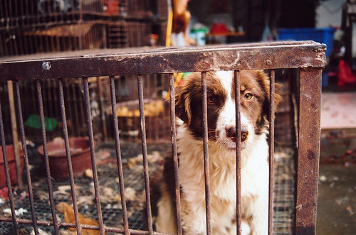 A sad dog in cage, China market