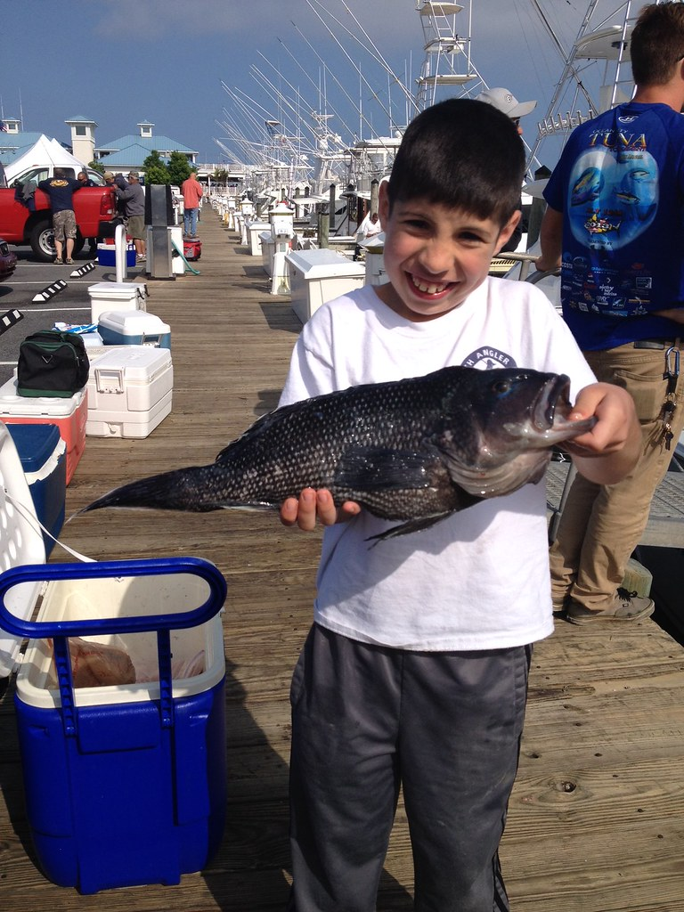 Black sea bass courtesy of josh vogel maryland for Md dnr fishing report