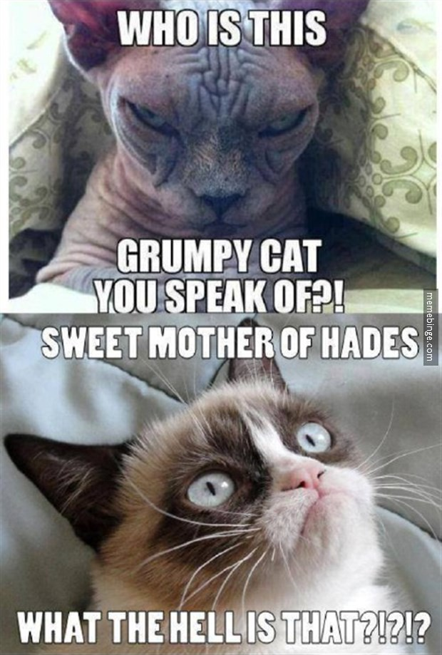 Grumpy Cat I Love You Meme
