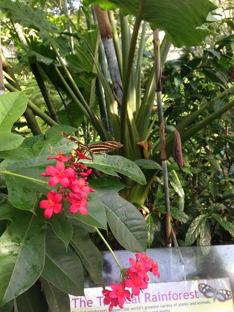 Uf Garden Seminar Tour Of The Flmnh Butterfly Rainforest