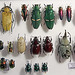 Insectes_0186
