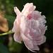 06-14 flowers-3392-Edit