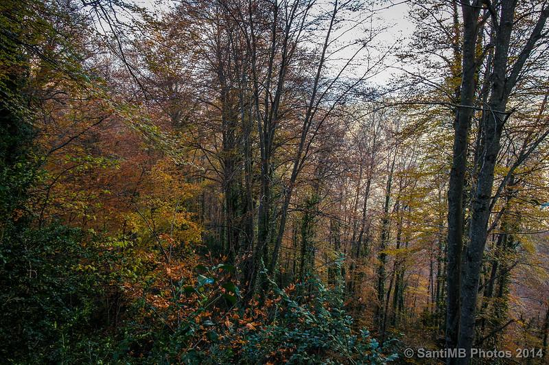 Colores de otoño en la umbría de la Serra dels Bufadors