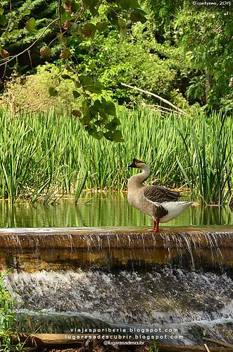 La naturaleza del Canal de Castilla (Palencia, España)