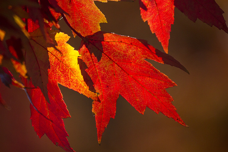 Photo of Fall Leaves by Barbara Cook