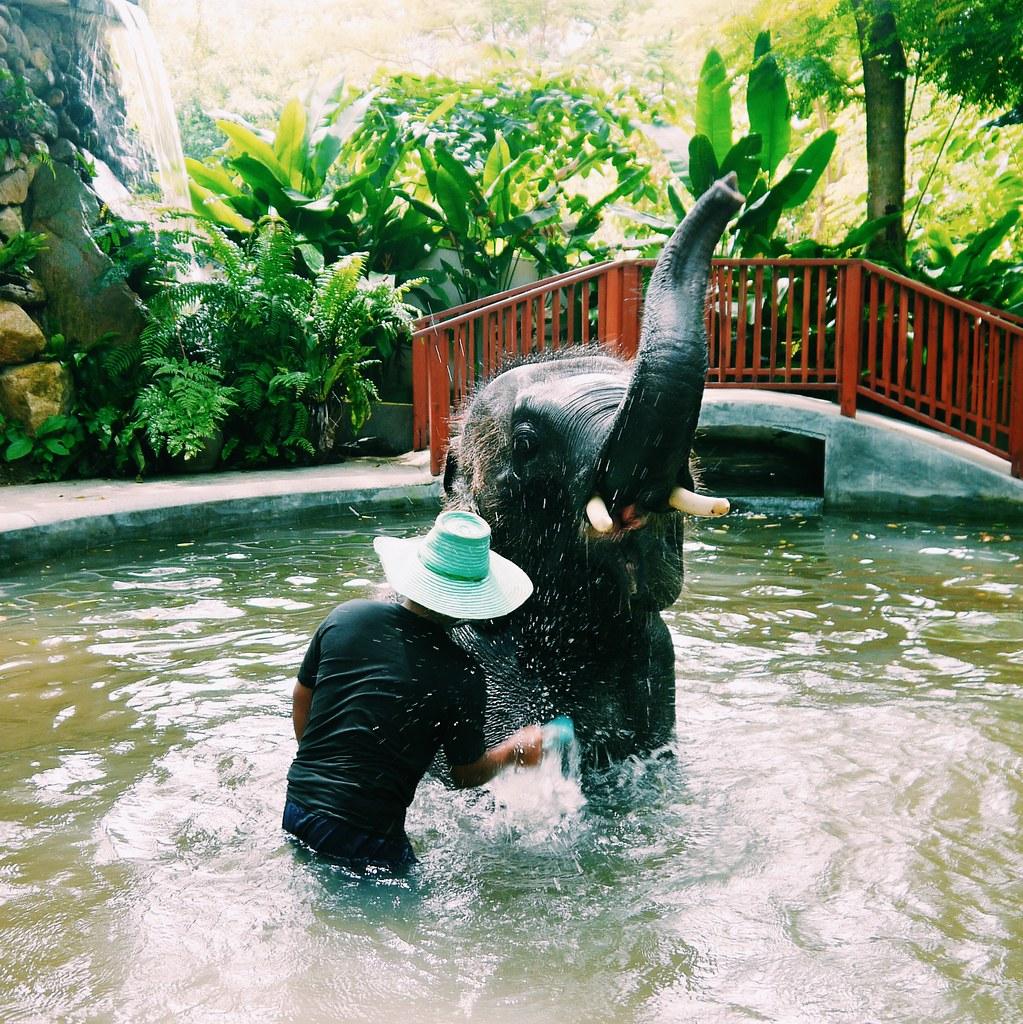 Elephant Bathing Koh Samui / Thailand / Kirsty Wears Blog