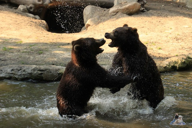 Tierpark Hagenbeck 04.07.2015  246