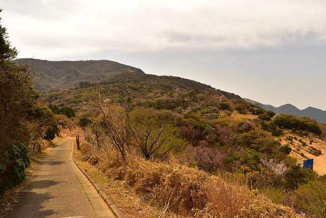 金冠山から達磨山への登山道