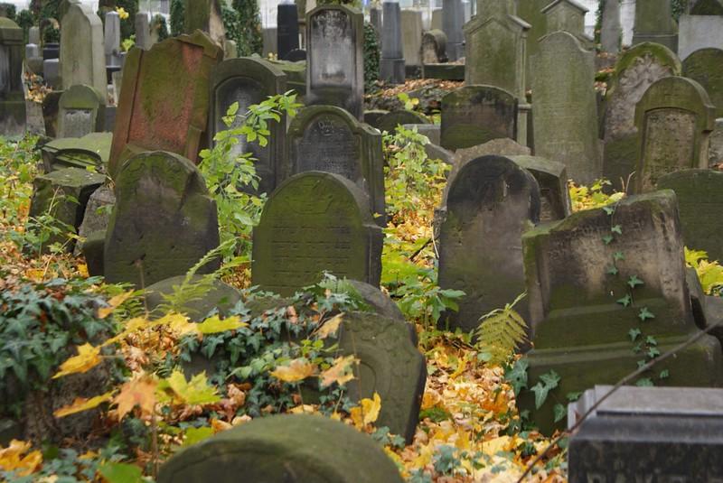 Nouveau cimetière Juif de Cracovie pour considérer l'importance de la communauté juive avant la guerre.