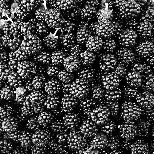 Very black blackberries