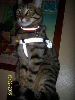 Rubro: un gatto molto indipendente, intelligente e coccolone
