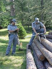 sequestro legna forestale