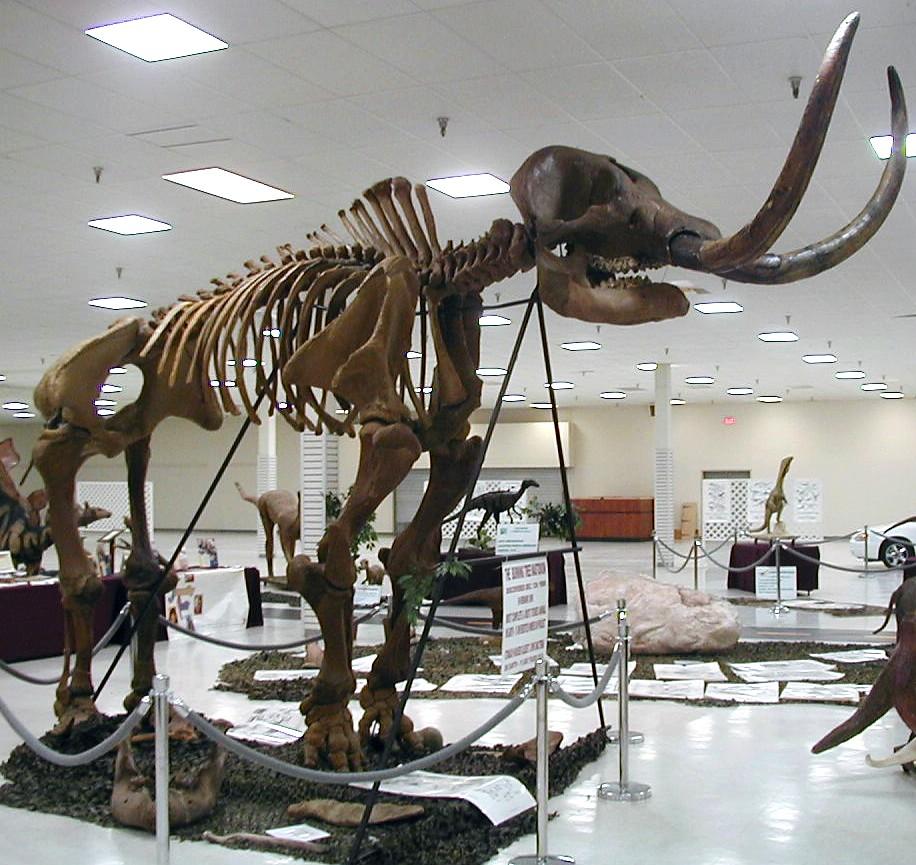 Mammut Americanum Burning Tree Mastodon Upper Pleistoce