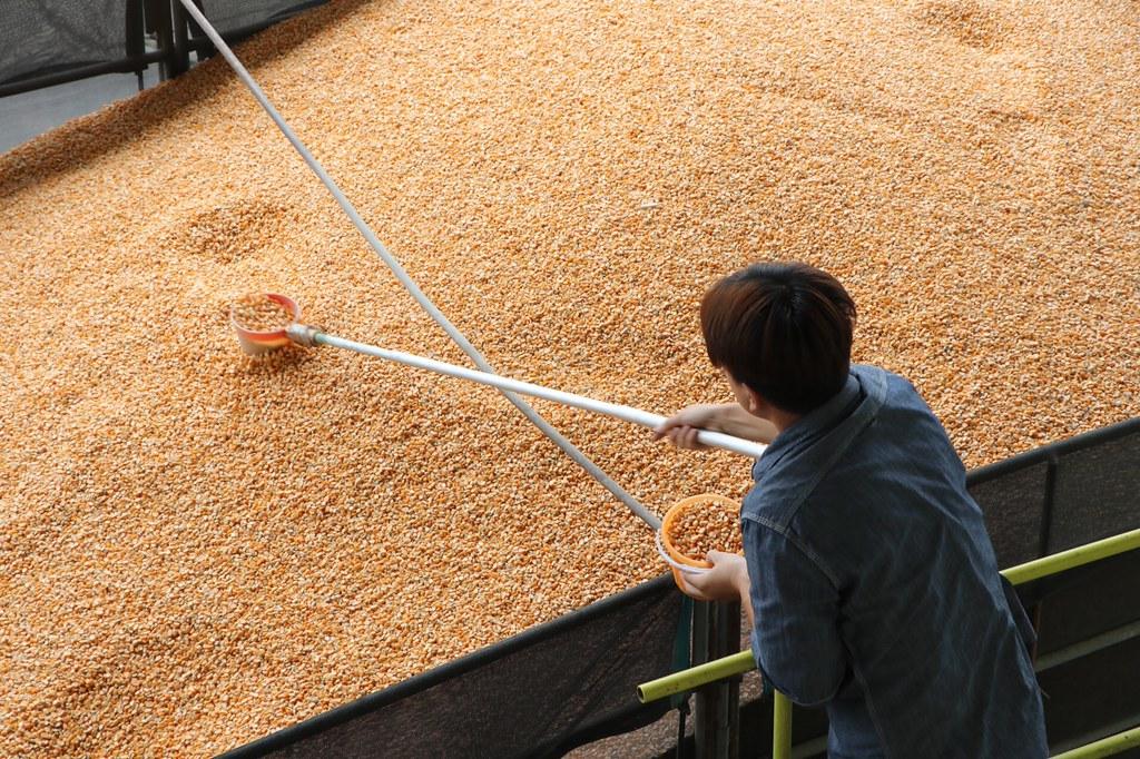契作硬質玉米留樣示範觀摩會2