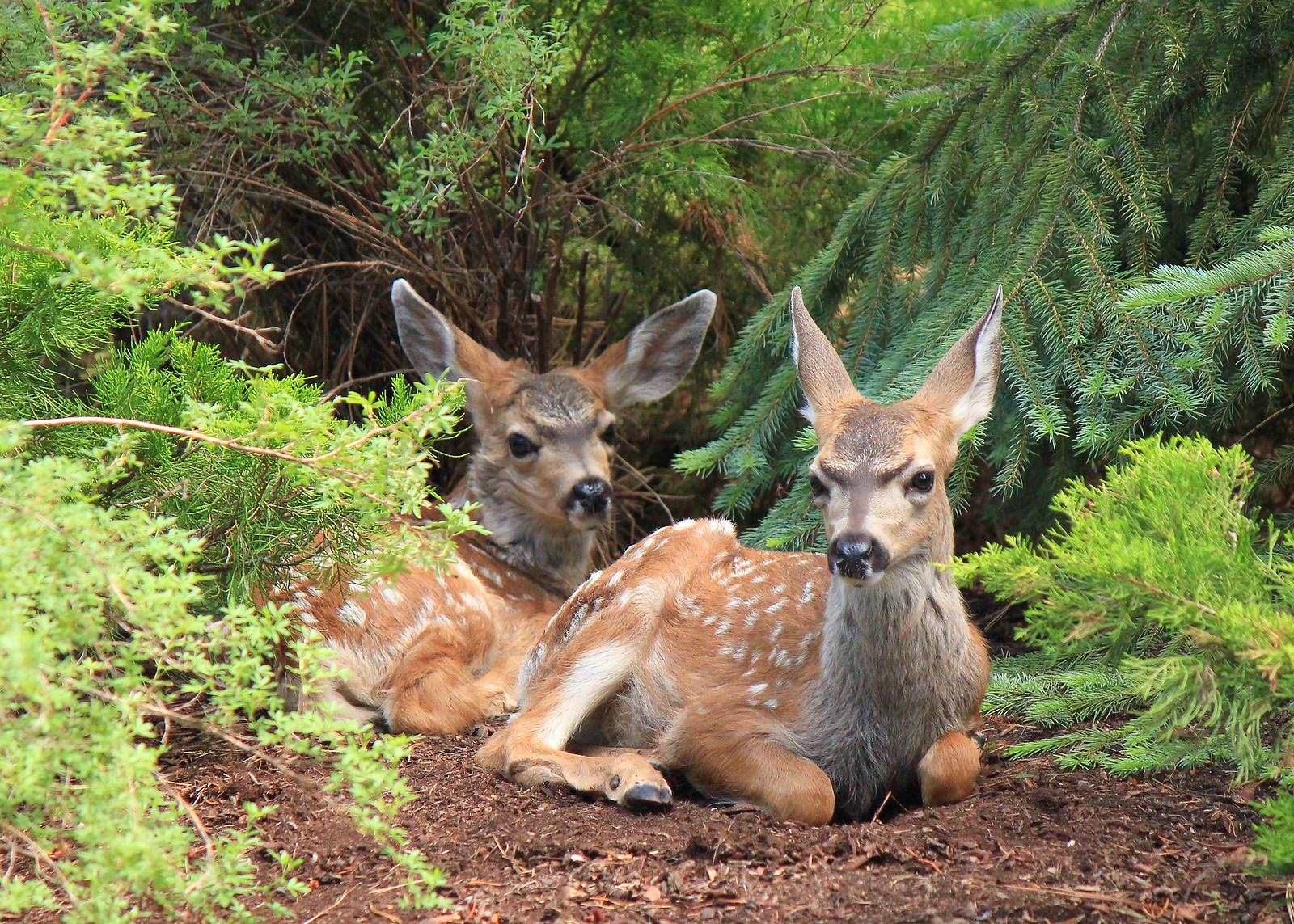 leave young wildlife in the wild