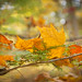 Autumn Safety Net