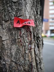 移樹工程團隊留下的標記,傷害了樹身,志工感到心痛