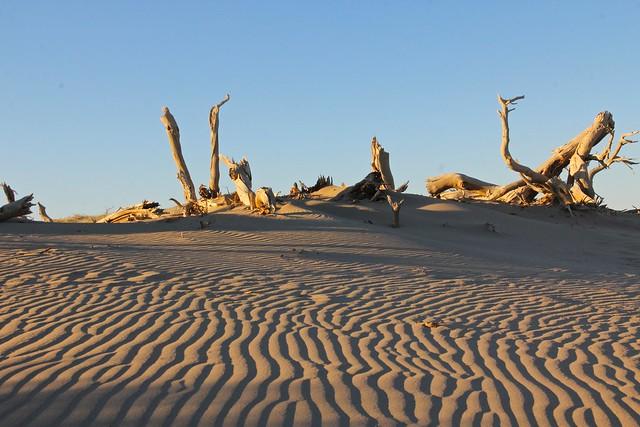 la decadencia de la creatividad. Naturaleza muerta en el desierto.