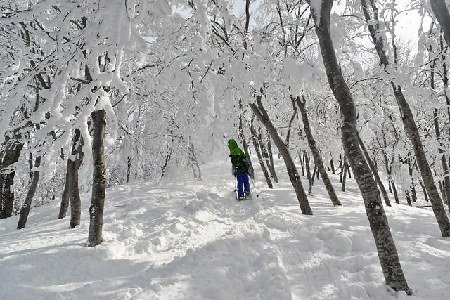 守門岳の樹氷
