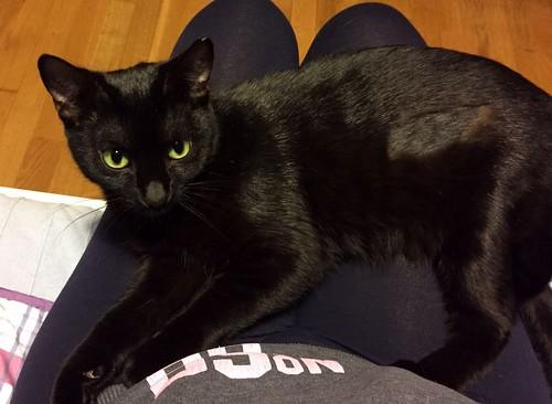 Morgana, gatita negra monísima, juguetona y tímida esterilizada, nacida en Julio´16, en adopción. Valencia. ADOPTADA. 33288744466_ac028230ac