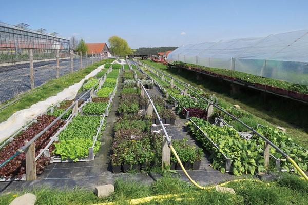 過了幼苗期的蔬菜,則移出網室,於充足陽光下生長。圖片來源:張正陽攝影,主婦聯盟提供。