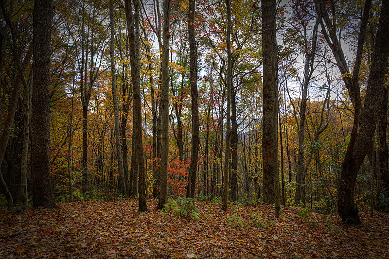 Fall Color (Brasstown ...
