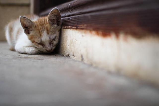 Pour la majorité des chats nés et vivant dehors, la vie se résume à la maladie, le froid et et la faim.