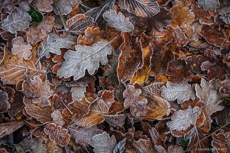 Hojas secas en el suelo de La Comellassa