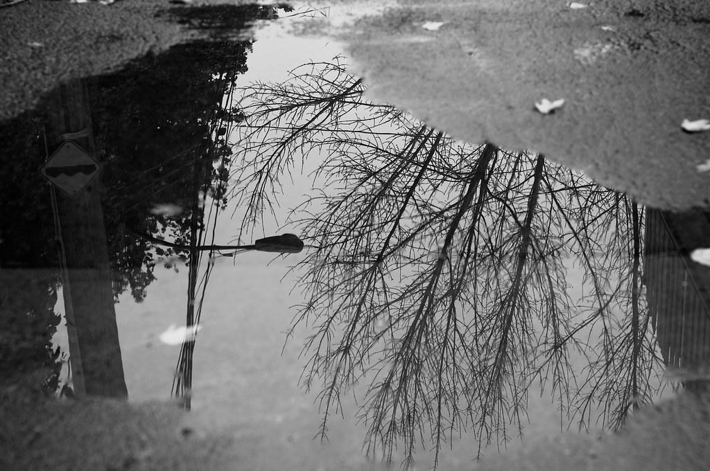Miroir miror l 39 automne le vent et la pluie sur montr al for Miroir miroir montreal