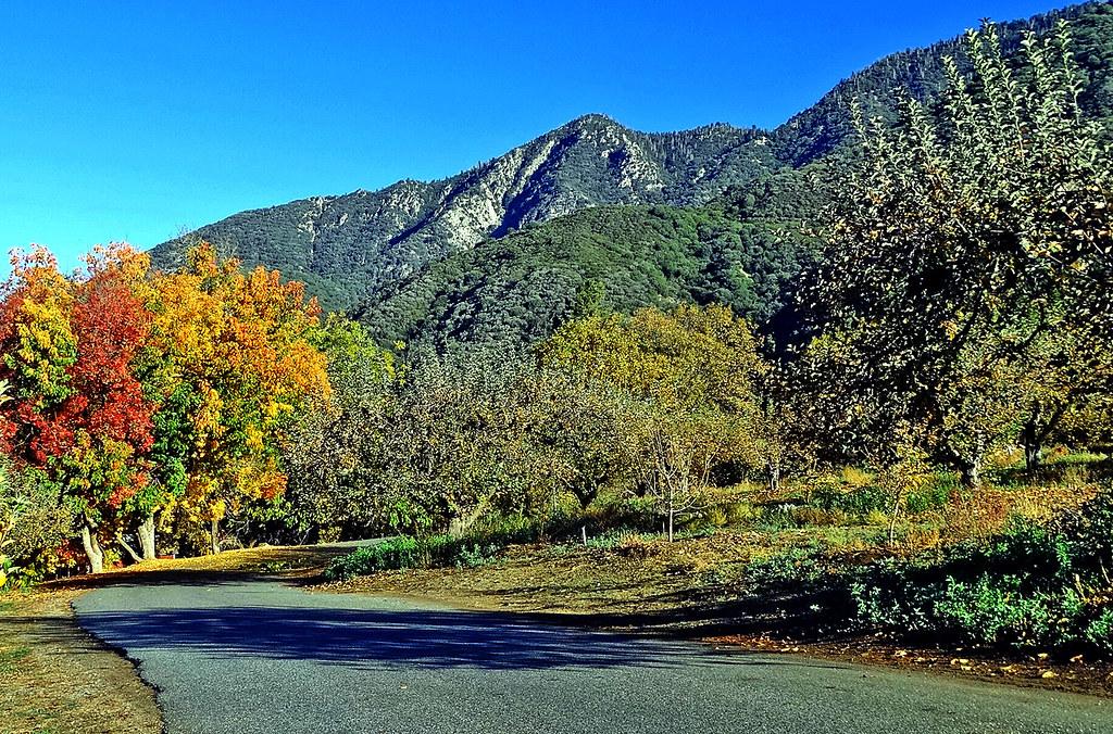 Orchard Lane, Oak Glen, CA 11-13   (1 in a multiple ...