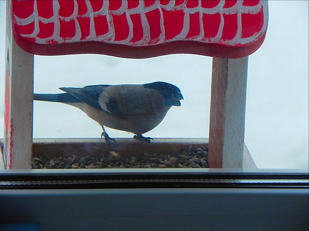 птички Татарстана 2