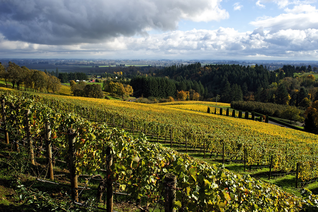Dundee Hills Oregon 2014 Autumn In The Oregon Wine