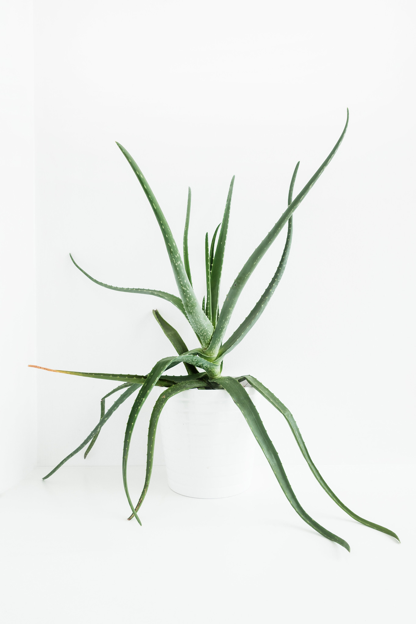 Low Maintenance Houseplants