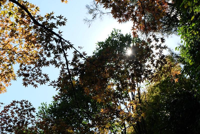 2014.10.23 平安神宮