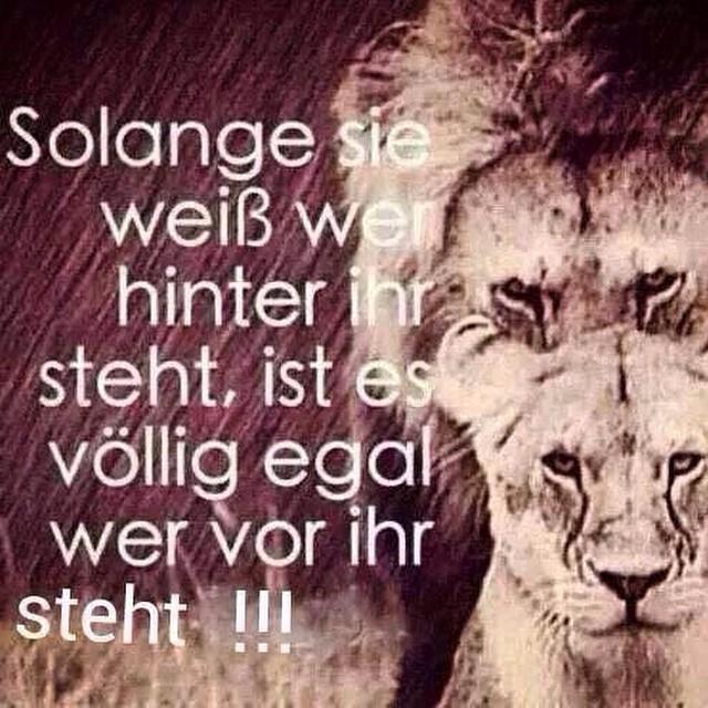 So ist es. #Tiger #Lion #Zitate #Sprüche #Löwe #Inspiratio ...