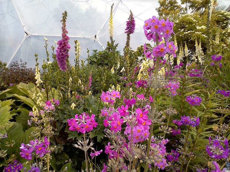 The Eden Project, Cornwall - summer flowers