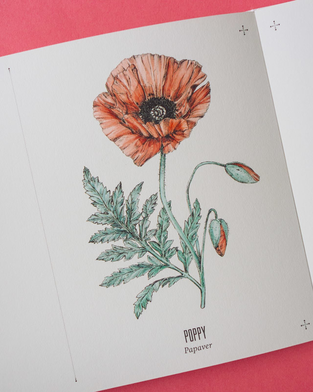 poppy illustation in tatouage book